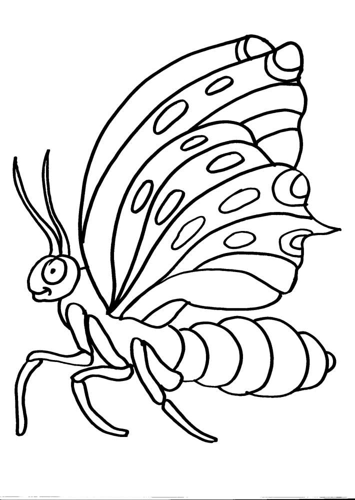 Disegni animali da colorare farfalla disegno farfalla da - Zoo animali da colorare ...