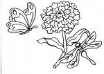 disegni animali da colorare..farfalla..disegno farfalle da colorare in fattoria didattica..farfallina da colorare sul fiore..disegno farfallina che vola sul prato in fiore..afide da colorare..