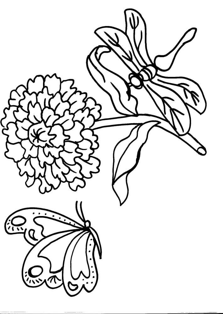 Disegno Farfalla Da Colorare Disegno Farfallina Da Colorare