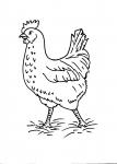 disegni animali in fattoria da colorare..gallina..disegno gallina da colorare in fattoria didattica..disegno tacchino da colorare per bambini..disegno pulcino con chioccia da colorare...disegno gallinella da colorare