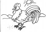 disegni da colorare in fattoria..gallo,gallina..disegno gallina da colorare in fattoria didattica..disegno emu da colorare...disegno struzzo da colorare..uova di struzzo da colorare...faraona da colorare