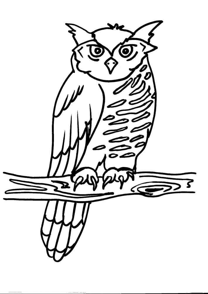 Gufo da colorare per bambini ip52 regardsdefemmes - Animali immagini da colorare pagine da colorare ...