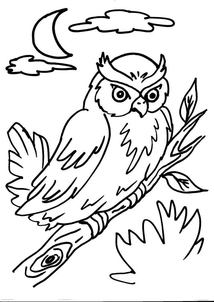 Disegno civetta da colorare disegno gufo da colorare - Come disegnare un cartone animato di gufo ...