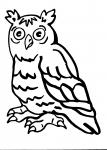 disegni animali da colorare per bambini..gufo..allocco..barbagianni..disegno barbagianni da colorare..disegno civetta delle nevi da colorare..disegno gufo reale da colorare..disegno rapace da colorare
