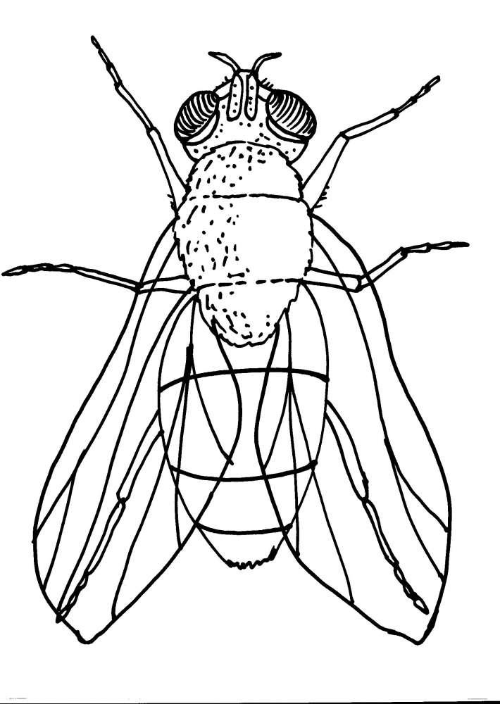 Disegno ragno da colorare disegno insetto colorare - Immagini del ragno da stampare ...
