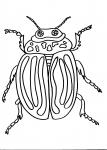 disegni animali da colorare per bambini..insetto..dorifora..disegno dorifora da colorare..disegno insetto nel prato da colorare..disegno scorpione da colorare..disegno formica da colorare formichina
