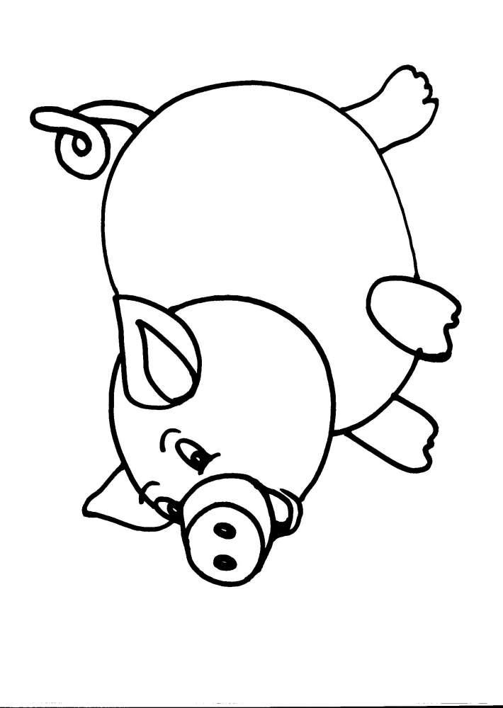 Disegni Da Colorare Di Animali Onnivori.Disegni Di Animali Onnivori Per Bambini