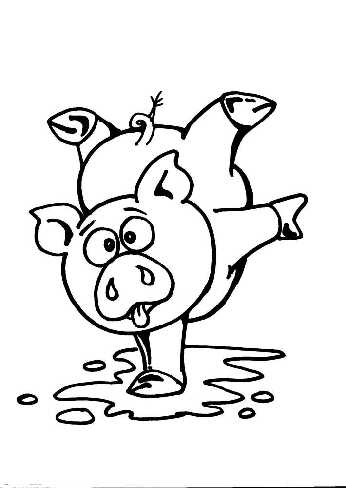 maiale  maialino  porcellino  porcello  suinet