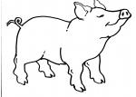 disegni animali della fattoria da colorare maiale,la mamma dei maialini si chiama scrofa mentre il papà dei maialini si chiama verro da colorare..disegno porcellini da colorare..disegno porcello da colorare..scrofa