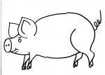 disegni animali della fattoria da colorare maiale..scrofa..disegno porcellini da colorare..disegno maiale rosa da colorare..disegno maiale duroc da colorare..disegno maiale large white da colorare
