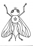 disegni animali da colorare mosca..la mosca insetto..disegno mosca insetto da colorare..disegno formica da colorare..ragno su ragnatela da colorare..maggiolino da colorare..lucciola da colorare