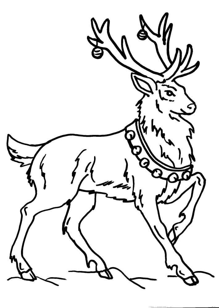 Renne Da Colorare.Disegno Cervo Da Colorare Cervo Disegno Da Colorare Di Cervo