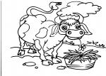 disegni animali della fattoria da colorare:mucca,disegno vitellino da colorare..disegno mucca piemonte da colorare..mucca chianina da colorare..mucca romagnola da colorare..mucca valdostana da colorare