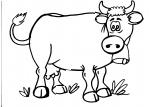 disegno mucca della fattoria da colorare:mucca,disegno da colorare mucca..disegno latte fresco.. agriturismi di Varese, prodotti tipici varesini, distributore di latte appena munto,animali fattoria,compleanno nelle fattorie didattiche..