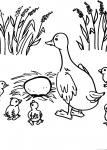 disegni animali della fattoria da colorare:oca..oche disegno oche da colorare.. agriturismi di Varese, prodotti tipici varesini, distributore di latte appena munto, salame prealpino, gelato in fattoria,disegno oca da colorare..