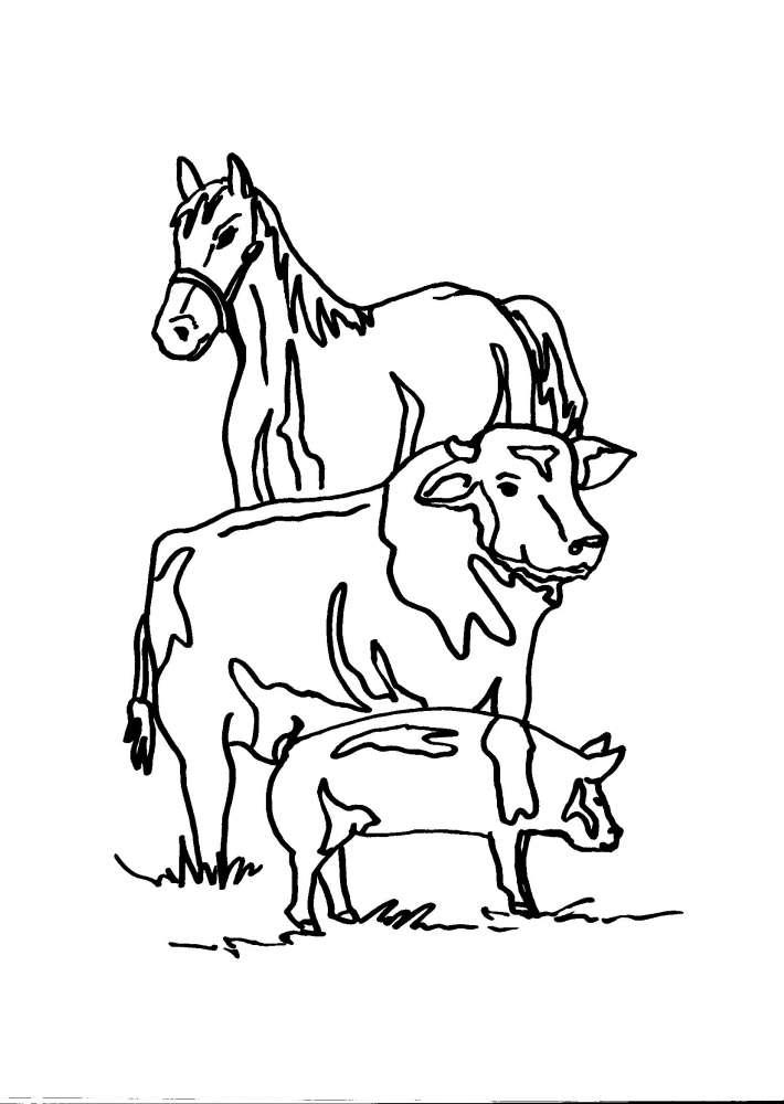Disegni animali in fattoria da colorare cavallo mucca for Fattoria immagini da colorare