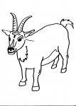 disegni animali in fattoria da colorare:capra,la capra ..disegno capra da colorare..disegno capretta da colorare..disegno becco da colorare..disegno capra camosciata delle alpi da colorare..