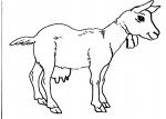 disegni animali in fattoria da colorare:capra..disegno capra da colorare..disegno capretta da colorare..disegno capra al pascolo da colorare..disegno capra saanen da colorare