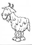 disegno capra della fattoria da colorarecaprail
