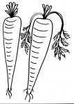 disegni per bambini da colorare:carota nell'orto ..disegno orto da colorare..disegno zucca da colorare...disegno frutta da colorare..disegno funghi da colorare..disegno pomodoro da colorare..zucchina..fagiolo da colorare