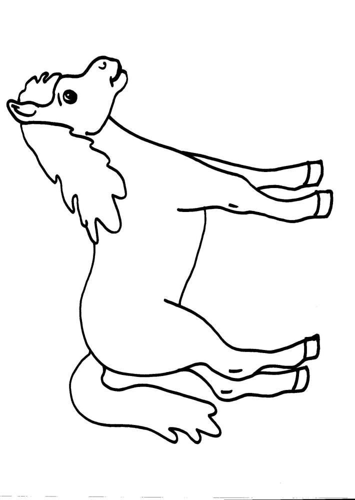 Disegni Per Bambini Animali In Fattoria Da Colorarecavalloil