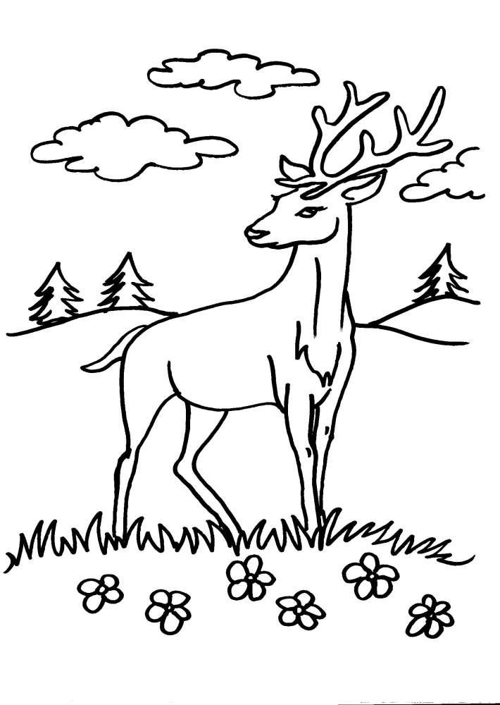 Disegni Per Bambini Da Colorarecervoil Cervo Capriolo Il Daino