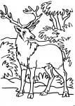 disegni per bambini da colorarecervoil cervo è u