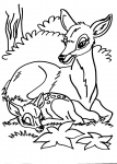 disegni per bambini da colorare:cervo-cerbiatto..disegno cerbiatto da colorare..disegno bamby da colorare..disegno renna da colorare..disegno lupacchiotto da colorare..disegno ghiro da colorare..disegno alce da colorare