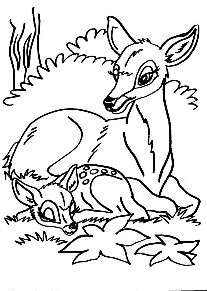 Disegni Per Bambini Da Colorare Cervo Cerbiatto Disegno Cerbiatto