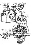 disegni per bambini da colorare:civetta,la civetta rapace notturno..disegno gufo da colorare..disegno civetta da colorare..disegno allocco da colorare..disegno assiolo da colorare..disegno gufo da colorare..disegno civetta da colorare...disegno gufetto
