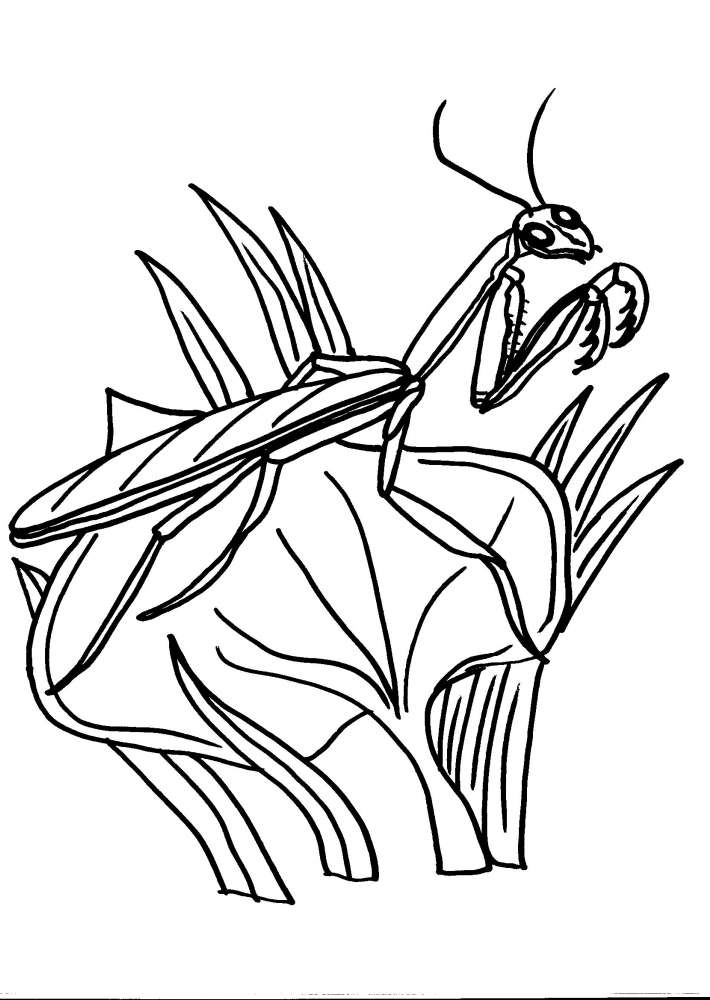 disegno mantide per bambini da colorare:mantide religiosa  disegno mantide religiosa da colorare  disegno insetto da colorare  prodotti tipici varesini,latte fresco appena munto,fattoria animali,fattorie didattiche