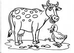 disegni animali in fattoria per bambini da colorare:mucca,la mucca ..disegno mucca da colorare..disegno vitellino da colorare..,prodotti tipici varese..disegno mucca in fattoria..disegno  toro furioso in fattoria da colorare