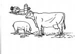 disegni animali della fattoria per bambini da colorare:mucca.la mucca è un ruminante disegno toro da colorare..agriturismi in provincia di varese,prodotti tipici varesini,disegno mucca da mungere da colorare..disegno sala di mungitura per mucche da colora
