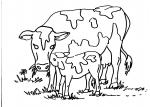 disegni animali della fattoria per bambini da colorare..mucca ..disegno mucca con vitellino da colorare..caseificio in fattoria..formaggio in fattoria..prodotti tipici varesini,latte fresco appena munto