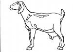 disegni animali della fattoria da colorare per bambini:pecora.. la pecora disegno pecora da colorare..disegno pecorella da colorare..disegno capre e pecore al pascolo da colorare