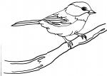 disegni animali  per bambini da colorare:uccello.gli uccellini..disegno uccellino da colorare..disegno passerotto da colorare..disegno piccione da colorare..disegno tortorella da colorare..disegno cincia da colorare