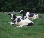 azienda agricola de bernardi, distributore latte crudo a busto arsizio,fattoria didattica a busto arsizio,fattorie didattiche,scuole in fattoria,disegni da colorare animali della fattoria per bambini,latte fresco
