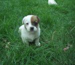 foto animali della fattoria:cane-cagnolino,il cane è il miglior amico dell'uomo,anche i cani vivono nelle fattorie,fattorie didattiche in provincia di varese,prodotti tipici varesini,immagini animali fattoria,didattica in fattoria