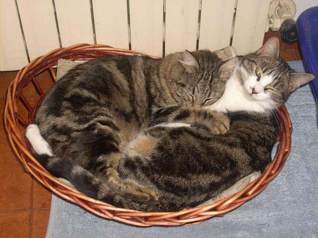 Foto animali nella fattoria gatto gattini micetti sono dei for Immagini gatti da colorare