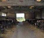 fattoria ottolenghi animali della fattoria da accarezzare per bambini..vitellini da toccare in fattoria da ottolenghi luigi a Oggiona..