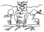 disegni animali da colorare della fattoria:civetta..gufo..barbagianni..i rapaci notturni..disegno gufo da colorare..disegno civetta nana  civetta delle nevi da colorare..disegno gufetto da colorare rapace notturno