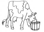disegni per bambini da colorare,disegni di animali della fattoria,mucca..toro..vitello..vacca..il vitellino disegno mucca che beve il latte da colorare..bufalino che beve il latte di mamma bufala da colorare
