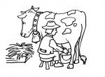 disegni da colorare della fattoria,disegni animali della fattoria da colorare per bambini.il contadino munge le mucche disegno contadino che munge la mucca da colorare..fattorie didattiche,agriturismi in provincia di varese,distributori di latte
