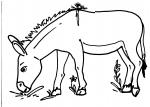 disegni da colorare,asino da colorare,animali da colorare,colorare animali fattoria,asino..equino..mulo..bardotto..fattorie didattiche..agriturismo..disegno somaro da colorare..disegno cavallo..asino.