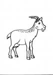 disegni animali nella fattoria da colorare,colorare animali fattoria per bambini,capra..le caprette..disegno capretta da colorare..disegno capra da colorare..disegno ariete da colorare..