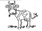 disegni animali della fattoria da colorare:mucca,le mucche o vacche sono mammiferi ..disegno mucca con corna da colorare..disegno bufalino da colorare..disegno mozzarella di bufala da colorare..mucche da colorare