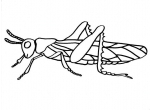 disegno cavalletta della fattoria da colorare,..disegno insetto..cavalletta da colorare.,cavalletta..insetti da colorare.locusta..cimice da colorare..afide da colorare..scorpione da colorare