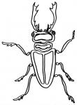 animali fattoria da colorare,disegni animali della fattoria da colorare,insetto-insetti da colorare.disegni insetti da colorare..cervo volante da colorare..alcuni insetti sono utili all'agricoltura..fattorie didattiche di varese..disegni gratis..
