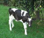 fattoria a Casale Litta da Pasini Vittorio..latte fresco ad Azzate..latte fresco a Mornago..latte alta qualità a Vergiate..Pasini Vittorio latte crudo a Casale Litta