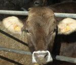 pasini Vittorio fattoria a Casale Litta con latte fresco di mucca..distributore latte fresco ad Azzate sul Lago di Varese..latte fresco a Sumirago..